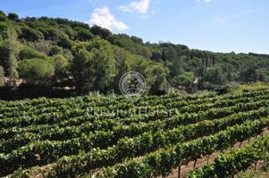 Masía con viñedos en Alella- Costa Barcelona photo 0